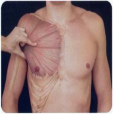 Curso Anatomia Palpatória